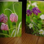 Pack of Fritillary note cards